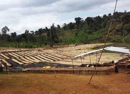 Raised coffee drying beds
